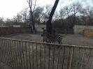 Зоопарк после соревнований