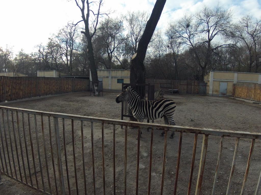 online store 1dbea 58c68 Зоопарк после соревнований
